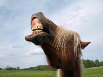 koń+by+się+uśmiał